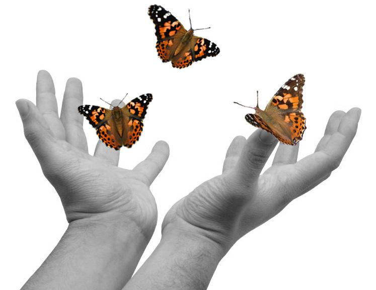 Nježni poput leptira | Recipe